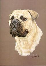 Bull Mastiff Limited Edition Print Head Study by Uk Artist Sue Driver