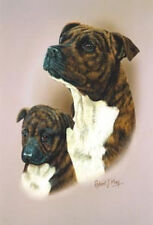 Robert J. May Head Study - Staffordshire Bull Terrier & Pup (Rmdh140)