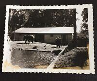 Vtg Elephants Florida Zoo Photo Snapshot Black White Real Pic 1956