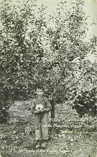 Postcard Boy Picking Pippens for the Fourth National Apple Show Spokane WA 1911