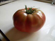 50 USDA Organic Prudens Purple Heriloom Tomato Seeds MOFGA Certified