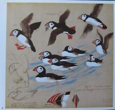 BEAUTIFUL VINTAGE TUNNICLIFFE BIRD PRINT ~ PUFFIN GULL ISLAND