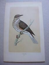 Gravure couleur 19°:oiseaux:Le redwing