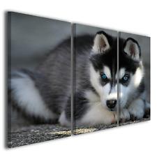 Stampe su tela canvas animali Husky cane riproduzioni quadri moderni ® quality