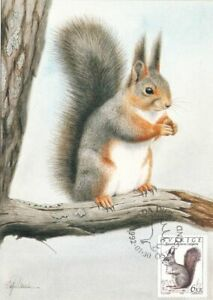 Squirrel Rodent World Wildlife Sweden Mint Maxi FDC Card 1992