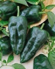 200 Seeds Ancho Grande Hot Pepper Seeds