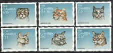 Gambia Stamp - Cats Stamp - NH