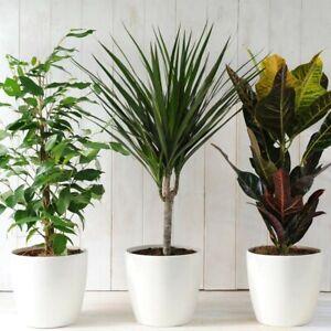 25x OSMOCOTE House Plant Food Feed Fertiliser.Single use tablets.Amazing results