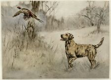 LABRADOR RETRIEVER YELLOW DOG LIMITED EDITION PRINT ENGRAVING by Henry Wilkinson