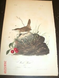 AUDUBON'S BIRDS of AMERICA 1st EDITION - WOOD WREN No. 119