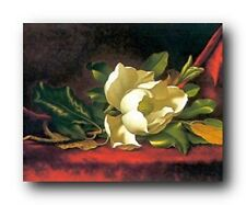 White Magnolia Flower Floral Grandiflora Martin Heade Wall Decor Art Print 16x20