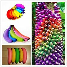 100pcs Rainbow Banana Seeds Bonsai Fruit Plants Tree Seeds Home Garden Decor