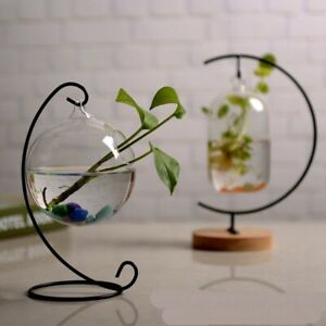 Hydroponic Ecological Glass Sphere Vase Transparent Round Small Fish Tank Bowl