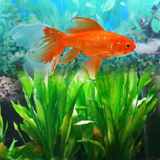 5PCS Artificial Fake Plastic Water Grass Plants for Fish Tank Aquarium  WH3