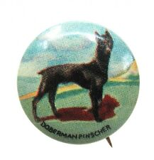 1930's DOBERMAN PINSCHER Dog tin litho pinback button
