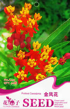 1 Pack 30 Prettiest Caesalpinia Seeds Caesalpinia Pulcherrima Globeflower A235