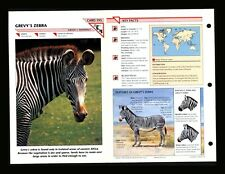 Grevy's Zebra Wildlife Fact File Mammal Animal Card Home School Study 1.193