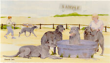 Deerhound Print: Off To The Dog Show by Uk Artist Sandra Coen - Last One!