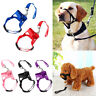 1x Pet Dog Puppy Muzzle Head Mouth Nose Stop Pulling Halter Training Lead Leash