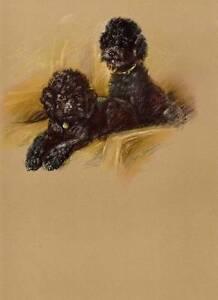 Original Lucy Dawson 1946 Vintage Colour Dog Print Black Poodles