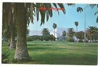 Postcard AZ Ajo Arizona Town Square Plaza Palm Tree