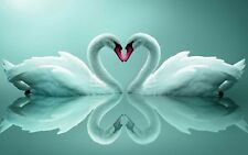 """Teal Swans in Love Heart Peace Calm 16""""x20"""" Canvas Picture Art Print Reflections"""