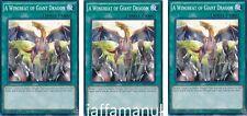 3 x A Wingbeat of Giant Dragon - SR02-EN027 - Common YUGIOH