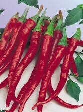 70 Long Red Cayenne Pepper seeds. HEIRLOOM. ***SAME DAY SHIPPING***