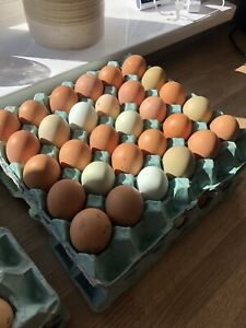 12x Pot Luck Pure Breeds Hatching / Fertile Eggs Large Fowl