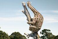 A1 | Silly Giraffe Poster Art Print 60 x 90cm 180gsm Funny Animal Fun Gift #8867