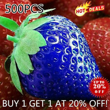 500 PCS  Blue Strawberry Seeds Fruit Vegetable Bonsai Garden Grow Nature Plants