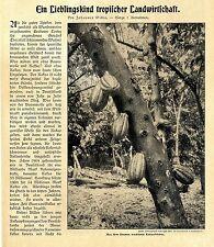 Deutsche Kakao- Plantagengesellschaft in Los Rios Ecuador Text-& Bildd. von 1907