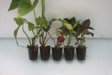 Indoor plants x 5  ( group1 )
