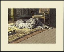 IRISH WOLFHOUND WESTIE TERRIER LOVELY LITTLE DOG PRINT MOUNTED READY TO FRAME