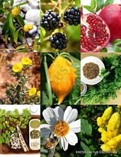 Medicinal Herb Plants Mix, heirloom Organic garden Non-Gmo seed -20 Seeds