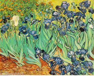 Vincent Van Gogh Irises Fine Art Giclee Canvas Print 12''x16''