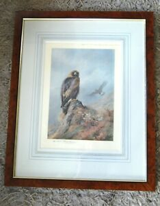 """Early 20th/C Signed Coloured Print """"Golden Eagle"""" by Archibald Thorburn"""