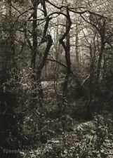 1944/56 Josef Sudek Winter Forest Landscape Trees Zima Original Photo Gravure