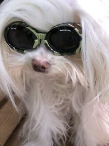 Doggles ILS2 Dog Sunglasses Camo Frame/Smoke Lens  Size SMALL NEW!