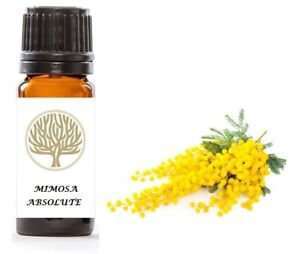 100% Pure Mimosa Absolute Oil