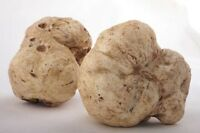 WHITE OREGON TRUFFLE mushroom spores spawn/mycelium (on dry seeds)