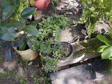 80 Cactus & Succulent Plants  Special Offer 2