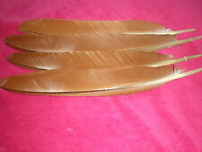 lot de 4 plumes paon confection mouche 35 cm
