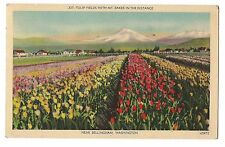 TULIP FIELDS Flowers Mt. BAKER Bellingham WASHINGTON Postcard Linen 1946