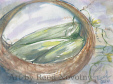 """Watercolor Painting Still life """"Loofahs In Basket"""" by Reed 8"""" X 10.5"""" Original"""