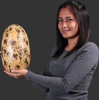 "Dinosaur  Theropod Egg 12"""