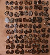 Wholesale Price!2.2lb/30-40Pairs Ammonite Cut in half Fossil Specimen Madagascar
