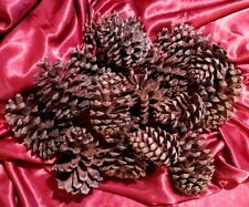16 assorted California pine cones crafts art school holiday Christmas decoration