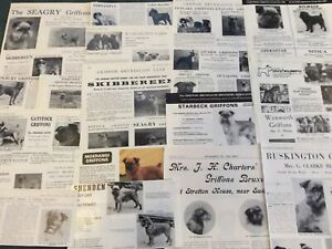 Griffon Bruxellois Kennel Breed Clippings