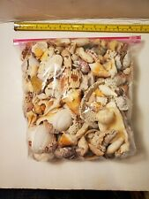 New Listing4 lb 13 oz Lot of Ass't of Florida Seashells Hand Picked with different types